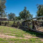 Sheep Yards - Made From Gidgee Tree - last forever